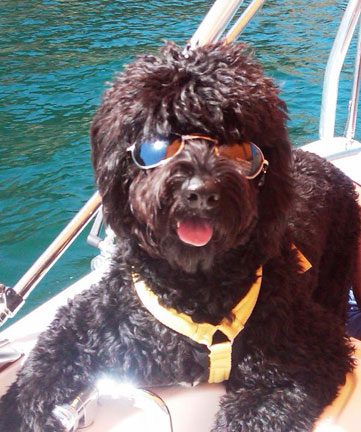 Dog Friendly Beaches Lake Havasu