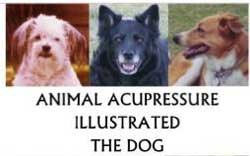 animal acupuncture for good pet health